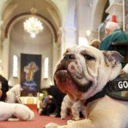 Animali in chiesa