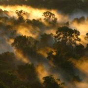 riserva dell'Amazzonia