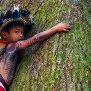 Baldisseri, sinodo Amazzonia, Laudato si'