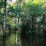Amazzonia dopo QA