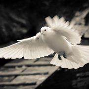 diaconi pace